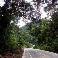 Таиланд. Ко Куд. Дорога через джунгли. :: Лариса (Phinikia) Двойникова