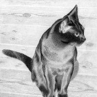 "Из моей графики. Кот породы ""бурма"". Рисунок карандашом. :: Лариса (Phinikia) Двойникова"