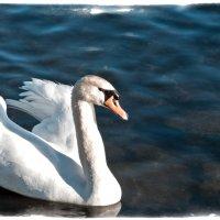 Лебедь :: Alexander Dementev