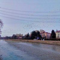 чайки на речке Сочинка :: Антонина Владимировна