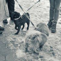 Хитросплетения собачьей жизни :: Андрей Майоров