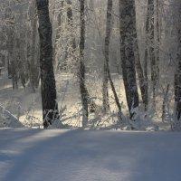 Мороз и солнце! :: Ирина Королева