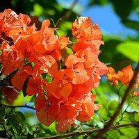 Балийские цветы (5/5) :: Асылбек Айманов