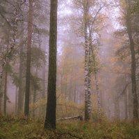туман в лесу :: Василий Иваненко