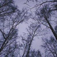 Небо :: екатерина