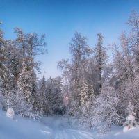 Утренний лес :: vladimir