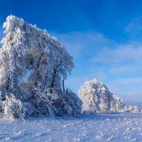 Шедевры матушки зимы . :: Юрий Глаголистов