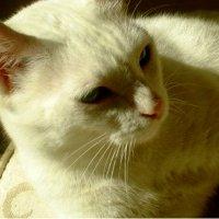 Удивительный мир кошек. :: Натали Пам