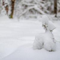 Зимние зарисовки :: Владимир Лазарев