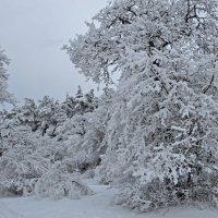 Зимушка-царица снежно-ледяная. :: Наталья Джикидзе (Берёзина)