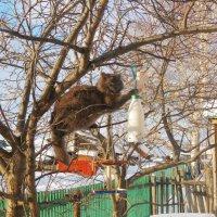 Охотник за синичкиным салом :: Марина Прасолова