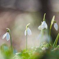 Весна наступает широким фронтом! :: Александр Земляной