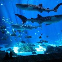 Атланта . самый большой аквариум в мире :: Naum