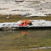 остров забытой собаки :: Naum