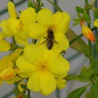Желтый цветик. :: Оля Богданович