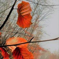 В молочном тумане :: Валерий Розенталь