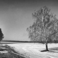 Одинокая березка v.3.0 :: Сергей
