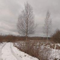две березки молодые во поле гуляют.. :: Михаил Жуковский
