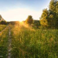 На встречу к солнцу :: Наталия Горюнова