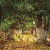В сельском парке :: Вера Сафонова