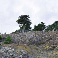 На живописных склонах Троодоса. :: Виктор Куприянов
