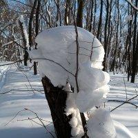 Февральский лес :: Андрей Заломленков