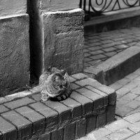Утренняя кошка :: Татьяна [Sumtime]