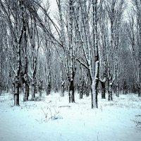 В зимнем лесу :: Сергей Форос