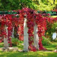 Пергола в виноградном багрянце... :: Sergey Gordoff