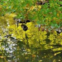 Утиный угол в золотых отражениях... :: Sergey Gordoff