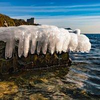 Медузы греются на камнях) :: Allex Anapa
