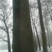 Зима :: Сапсан