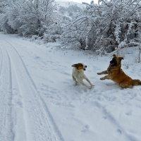 Игривые собаки :: Наталья Джикидзе (Берёзина)