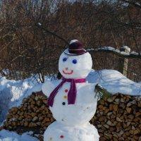 снеговик :: linnud
