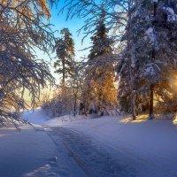 Утро в лесу :: vladimir Bormotov