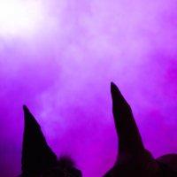 Ночь ведьм :: Мария Собко