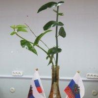 Если ты далеко, посмотри на флаг... :: Дмитрий Никитин