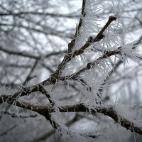 Зима. :: Оля Богданович