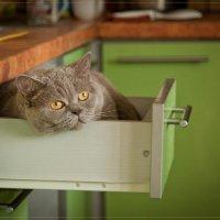Найди кота :: Татьяна Панчешная