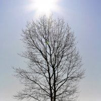 Свет и тени апреля :: Николай Масляев
