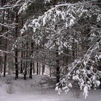 Здесь сказки детства помнят лес... :: Лесо-Вед (Баранов)