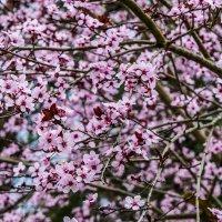 Цветы :: Karolina