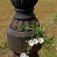 Городские цветы :: Сергей Тарабара