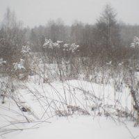 Февральский снегопад 1 :: Владимир Носов