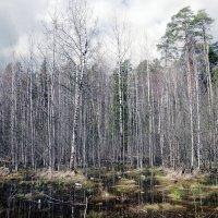 Лесной пейзаж :: Алексей Подрезов