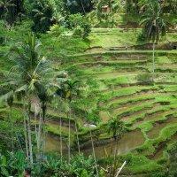 Бали :: Slava Hamamoto