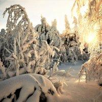 Утро в зимнем лесу :: Анатолий