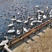 Птичий базар в Стокгольме :: Swetlana V
