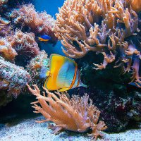 Подводный мир :: Татьяна Каримова