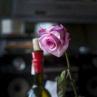 роза :: Сергей